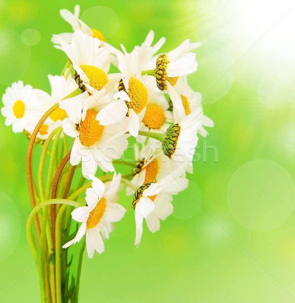新鮮な デイジーチェーン 花 花束 孤立した 緑 ストックフォト © Anna_Om