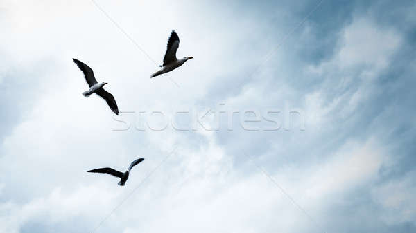 Three seagulls in the sky Stock photo © Anna_Om