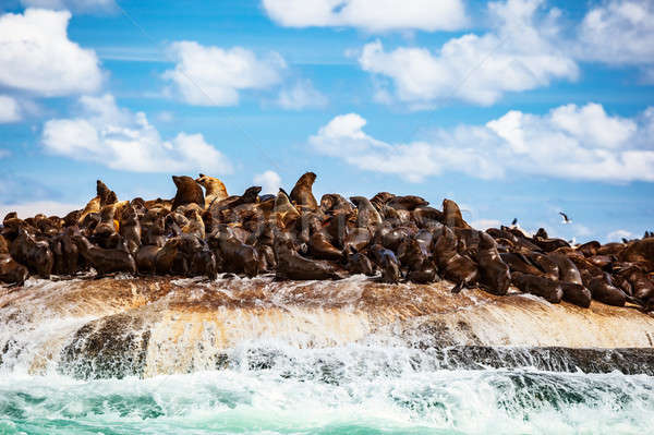Sauvage mer île colonie magnifique animaux marins Photo stock © Anna_Om