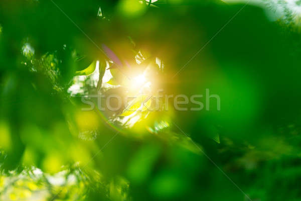Frischen grüne Blätter Strahlen Sonne Erzeugnis Weg Stock foto © Anna_Om