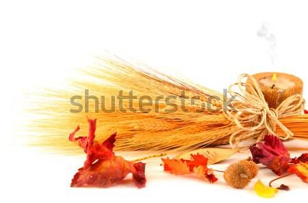 紅葉 国境 キャンドル 小麦 孤立した 白 ストックフォト © Anna_Om