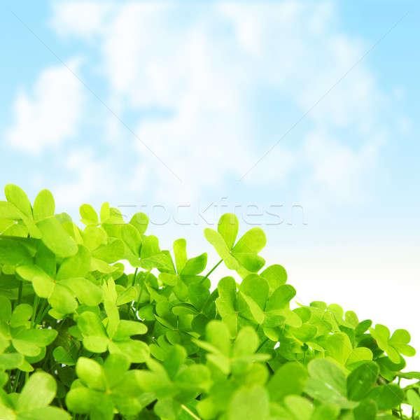 Yeşil taze yonca alan resim gün Stok fotoğraf © Anna_Om