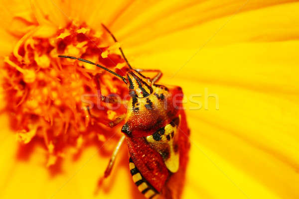 Primo piano fiore piccolo bug natura estate Foto d'archivio © Anna_Om