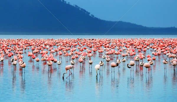 Stock photo: African flamingos