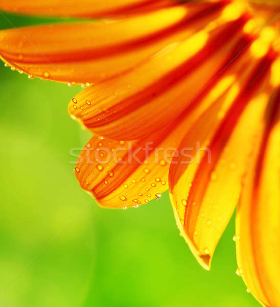 abstract flower petals colorful floral border stock photo