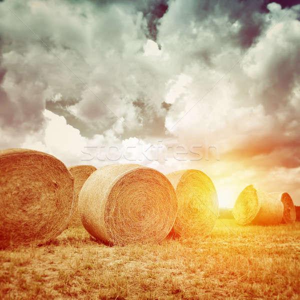 Many dry haystack in sunset light Stock photo © Anna_Om