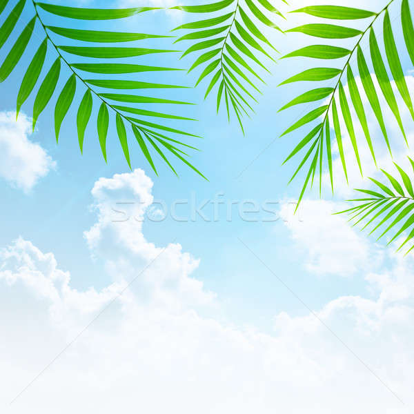 Holidays background border Stock photo © Anna_Om