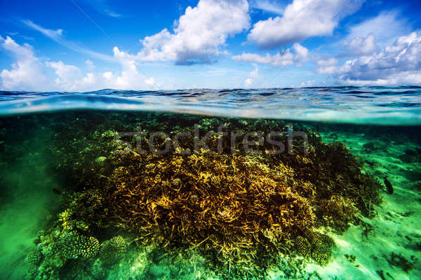 Corail jardin subaquatique belle plongée Maldives Photo stock © Anna_Om