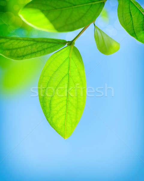 Fresh green leaves Stock photo © Anna_Om