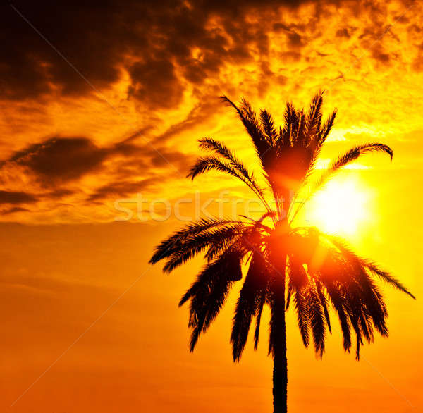 Palm tree silhouette over sunset  Stock photo © Anna_Om