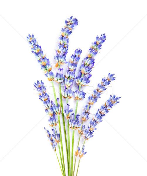 Сток-фото: лаванды · цветы · мало · ароматический · трава