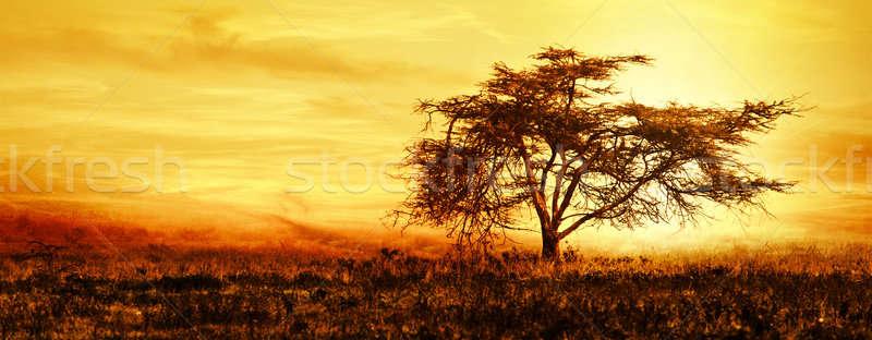 Stock fotó: Nagy · afrikai · fa · sziluett · naplemente · mező