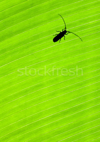Green leaf background with a bug Stock photo © Anna_Om