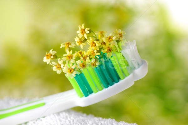 Spazzolino minuscolo fiori sanitaria medici natura Foto d'archivio © Anna_Om