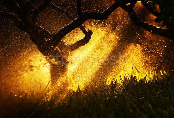 Caliente puesta de sol luz del sol otono forestales luz Foto stock © Anna_Om