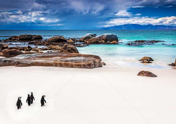 Güney afrika küçük grup yürüyüş plaj Stok fotoğraf © Anna_Om