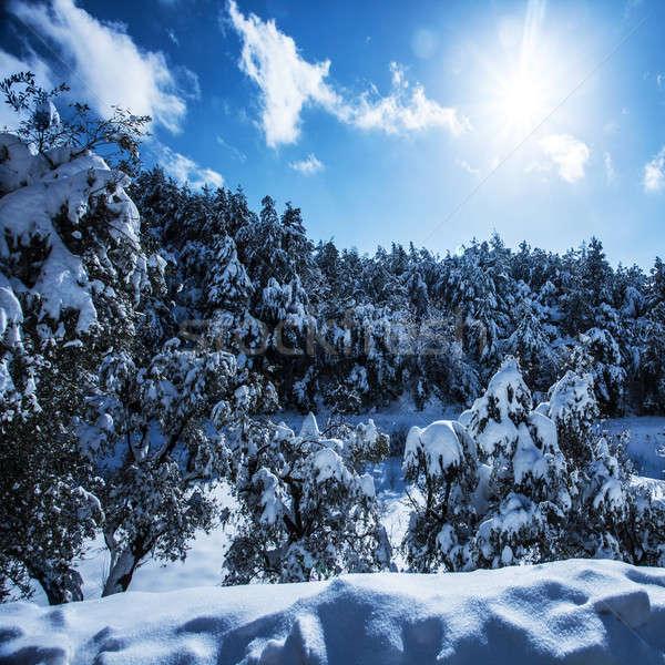 Forestales montanas foto hermosa brillante sol Foto stock © Anna_Om