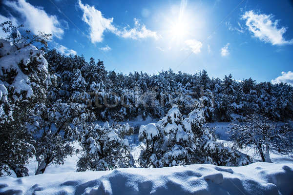 Bos bergen foto mooie berg heldere Stockfoto © Anna_Om