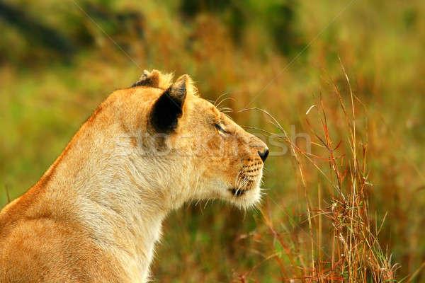 Африка Кения весны кошки красоту Сток-фото © Anna_Om