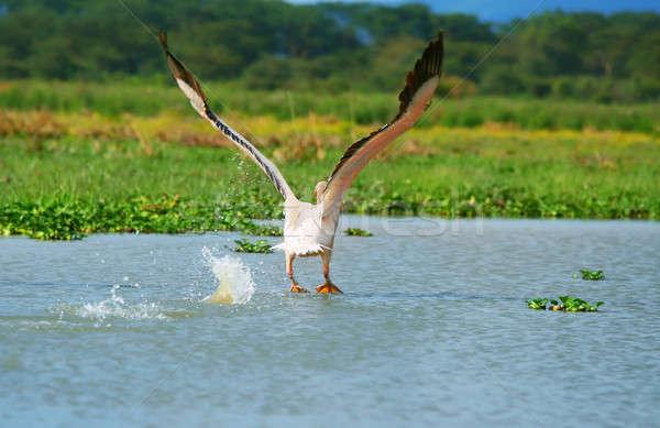 Сток-фото: Flying · белый · озеро · Африка
