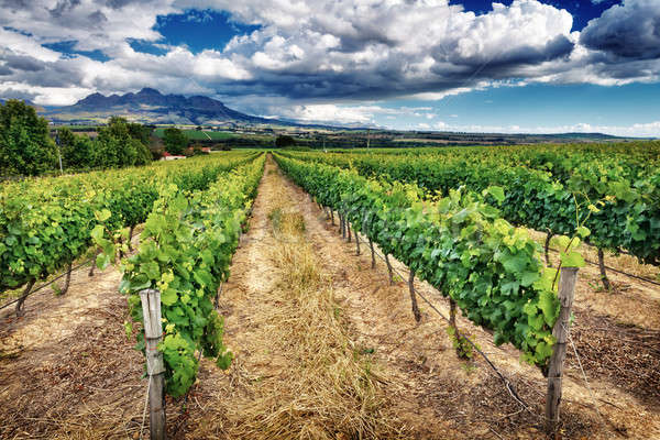 Beautiful vineyard landscape Stock photo © Anna_Om