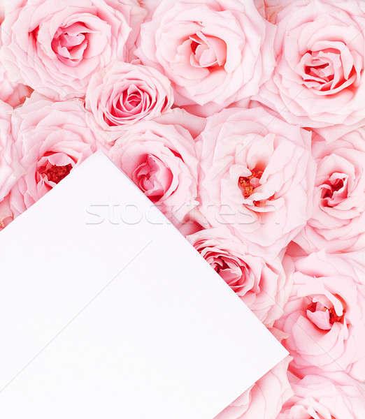 Biglietto d'auguri rose rosa fresche carta bianca fiore Foto d'archivio © Anna_Om
