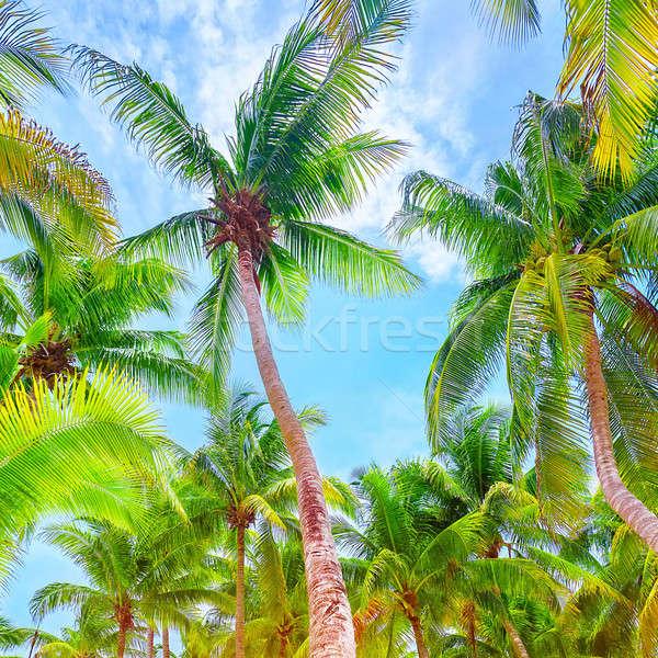 Fresh green palm trees background Stock photo © Anna_Om