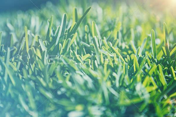 Vintage grass background Stock photo © Anna_Om