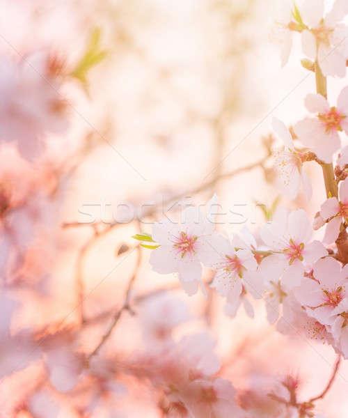 Tavasz virágzó fa álomszerű napos gyönyörű Stock fotó © Anna_Om