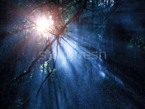 Rejtély esőerdő köd titokzatos nap sugarak Stock fotó © Anna_Om