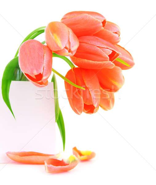 Taze pembe lâle çiçekler boş kağıt tebrik kartı Stok fotoğraf © Anna_Om