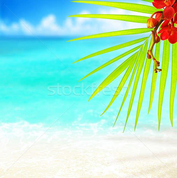 Tropikalnej plaży selektywne focus palma pozostawia spokojny niebieski Zdjęcia stock © Anna_Om
