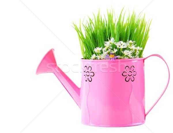 Annaffiatoio fresche primavera fiori di campo rosa isolato Foto d'archivio © Anna_Om