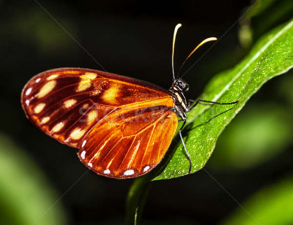 Beautiful butterfly Stock photo © Anna_Om