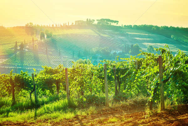 Beautiful grape valley landscape Stock photo © Anna_Om
