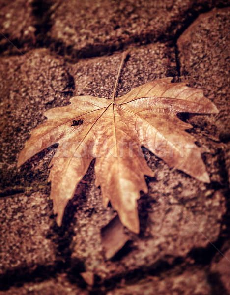 Abstract autumn background Stock photo © Anna_Om