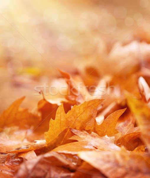 Secar terreno abstrato outono velho Foto stock © Anna_Om
