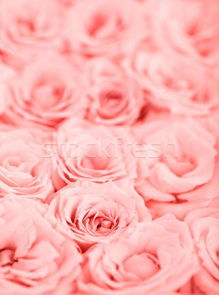 ストックフォト: ピンク · バラ · 新鮮な · 選択フォーカス · 花 · 結婚式