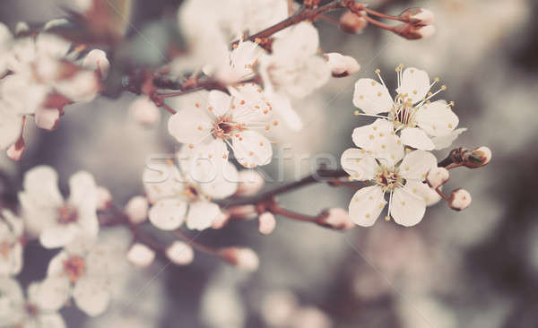 Beautiful floral background Stock photo © Anna_Om
