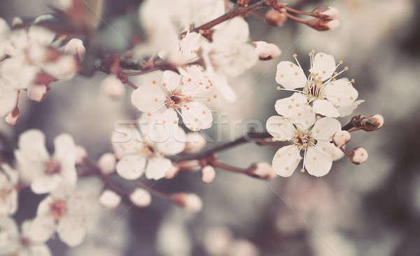 Güzel bağbozumu nazik küçük beyaz çiçekler Stok fotoğraf © Anna_Om