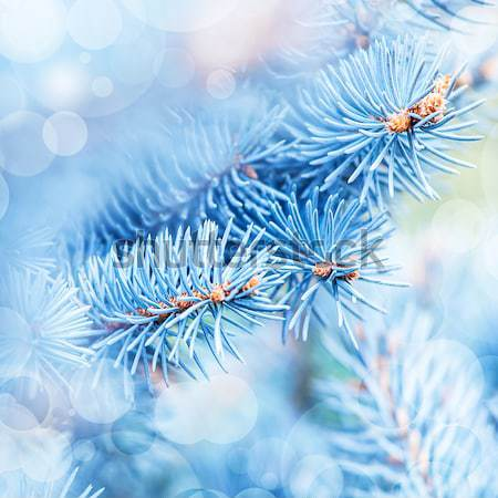 Frozen pine tree background Stock photo © Anna_Om