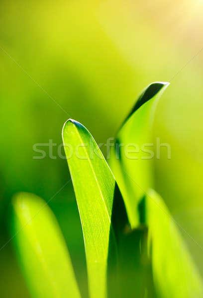 Groen gras vers abstract natuurlijke achtergrond zachte Stockfoto © Anna_Om