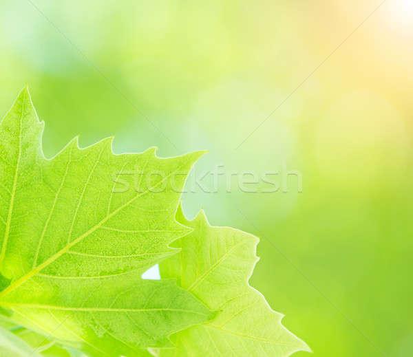 Frescos hojas frontera primer plano Foto stock © Anna_Om