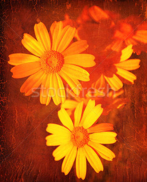 Abstract floral grunge background Stock photo © Anna_Om