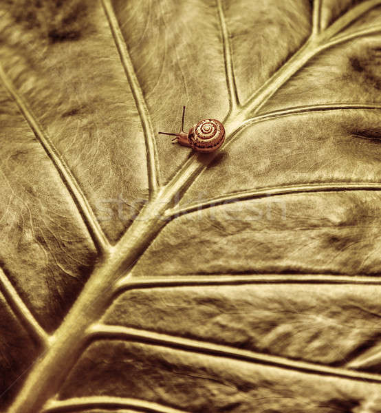 Little snail on green leaf Stock photo © Anna_Om