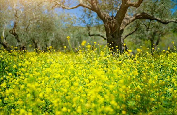 Beautiful spring garden Stock photo © Anna_Om