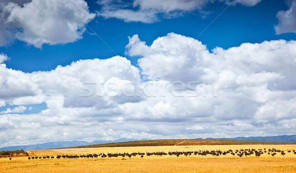 Dél-afrikai strucc farm madarak gyönyörű természetes Stock fotó © Anna_Om