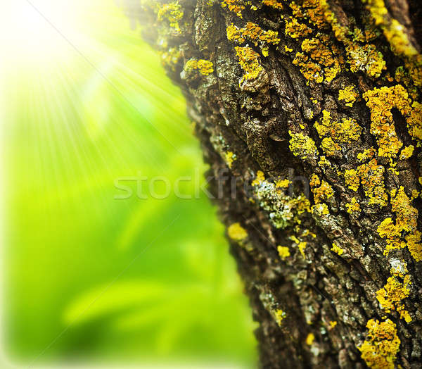 Spring forest abstract background Stock photo © Anna_Om