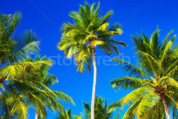 Abstract tropical background Stock photo © Anna_Om