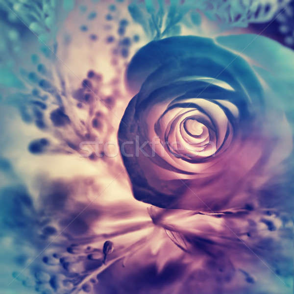 Dreamy rose background Stock photo © Anna_Om